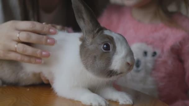Little girl caressing rabbit