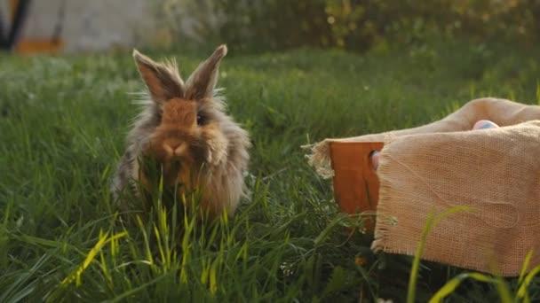 Braunes Kaninchen läuft in Korb mit Ostereiern.