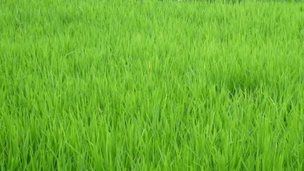 Zelené rostliny tráva detailní záběr na pozadí