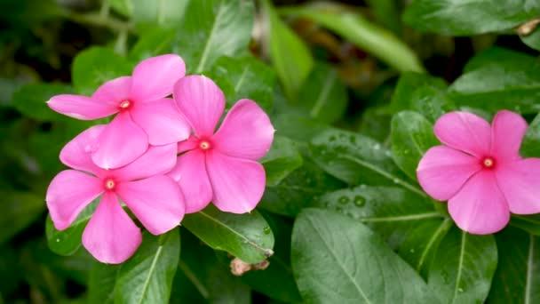 Exoticas Plantas Y Flores Tropicales En La Isla De Bali Indonesia