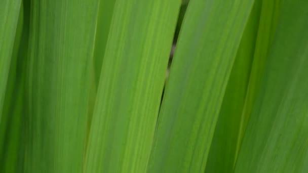 Krásné zelené trávě makro v létě na pozadí. Statická kamera HD video záznam 1920 x 1080.