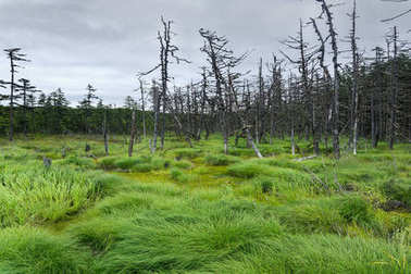 Northern swamp and spruce forest growing around.