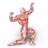 vykreslování 3D cg mužské postavy lay