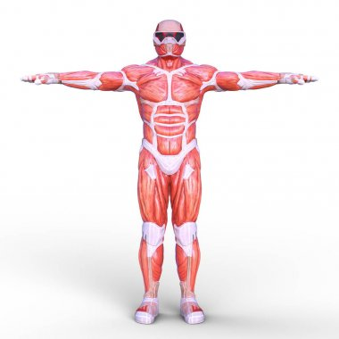3D CG rendering of a muscle hero