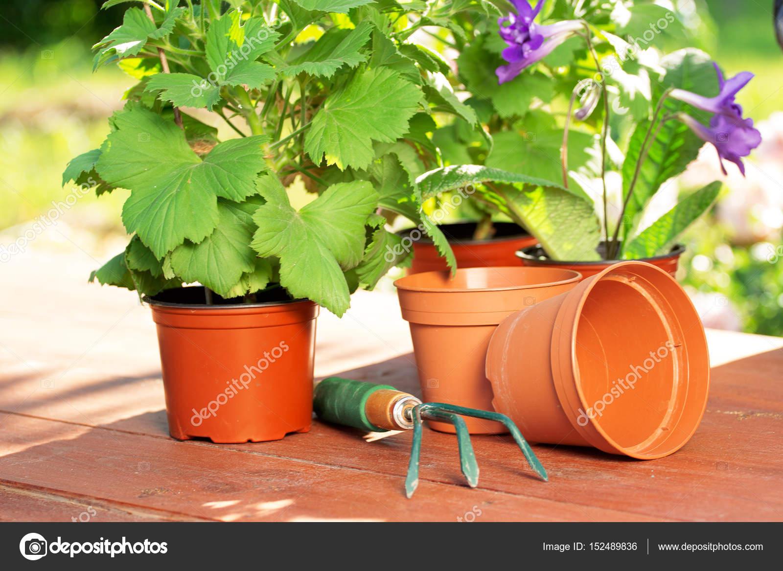 Horizontaler Garten pflanzzeit horizontale ansicht der grünen garten pflanzen und