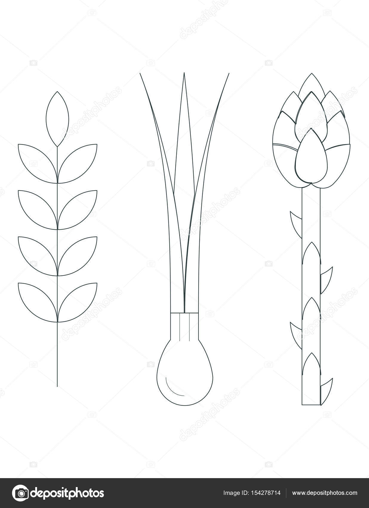 Greens asparagus onion plants stock vector everydaytemplate greens asparagus onion plants vector illustration vector by everydaytemplate ccuart Image collections