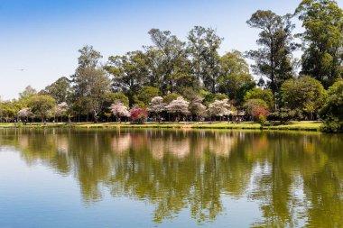 The lake of Ibirapuera Park, Sao Paulo.