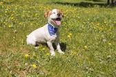 netter junger Hund Spaß in einem Park im Freien. Frühlingszeit. Grün