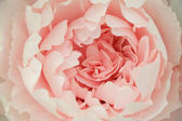 Photo Abstract floral background, pink flower made of paper.