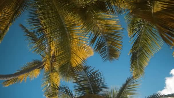 palmy na tropické pobřeží