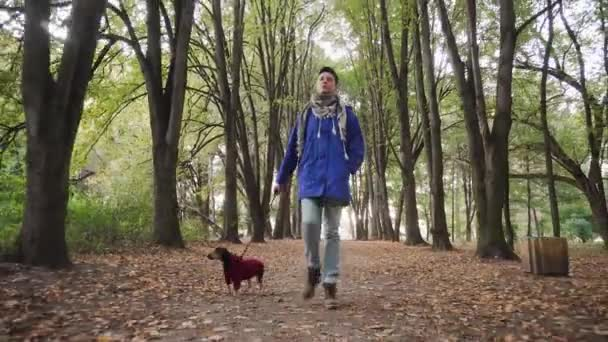 Žena, co se prochází se psem v parku. Roztomilý malý štěně teriér běží podzimním lesem.