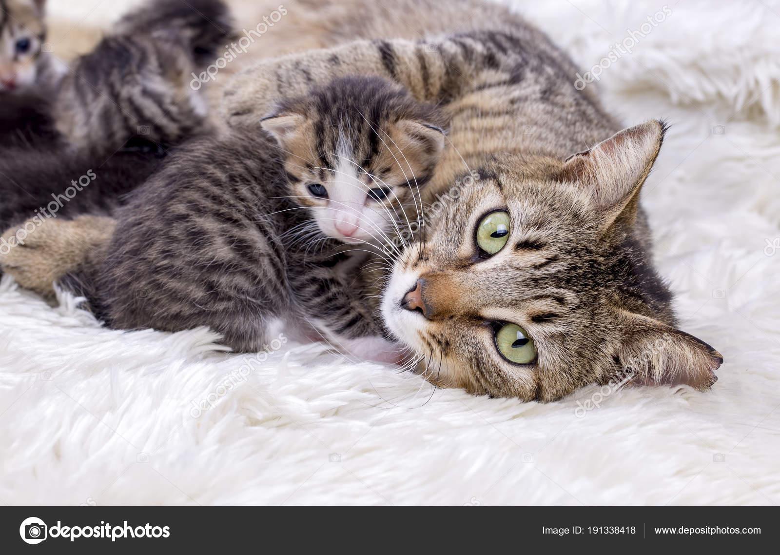 Mama Katze Und Baby Katzen Stockfoto Esindeniz 191338418