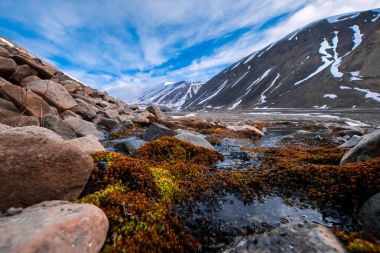 landscape nature of the mountains of Spitzbergen Longyearbyen Svalbard on a polar day with arctic flowers in the summer