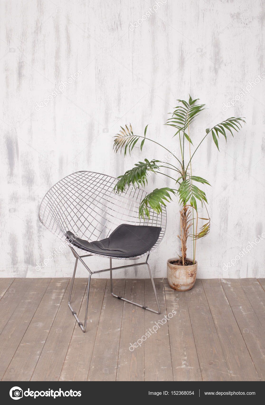 Moderne Lounge Stoel.Metal Lounge Chair And A Palm Tree In Bright Interior Stock