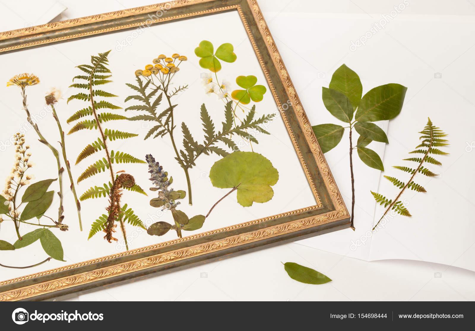 plantes de la forêt sèche pour herbier danslecadrede — photographie