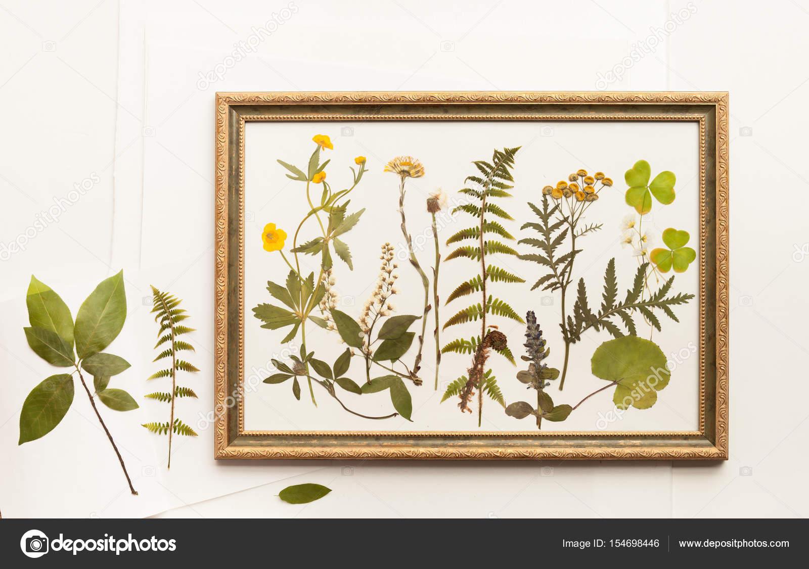 getrocknete pflanzen f r herbarium im rahmen stockfoto. Black Bedroom Furniture Sets. Home Design Ideas