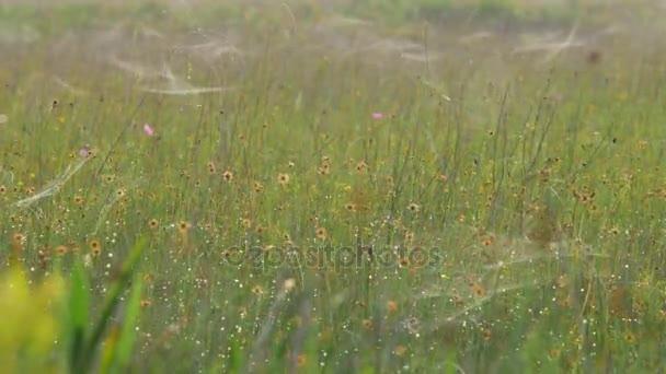 Flower Field Covered in Spiderwebs, 4K