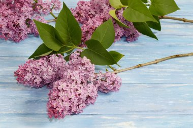 branches of lilac flowers on blue wooden board