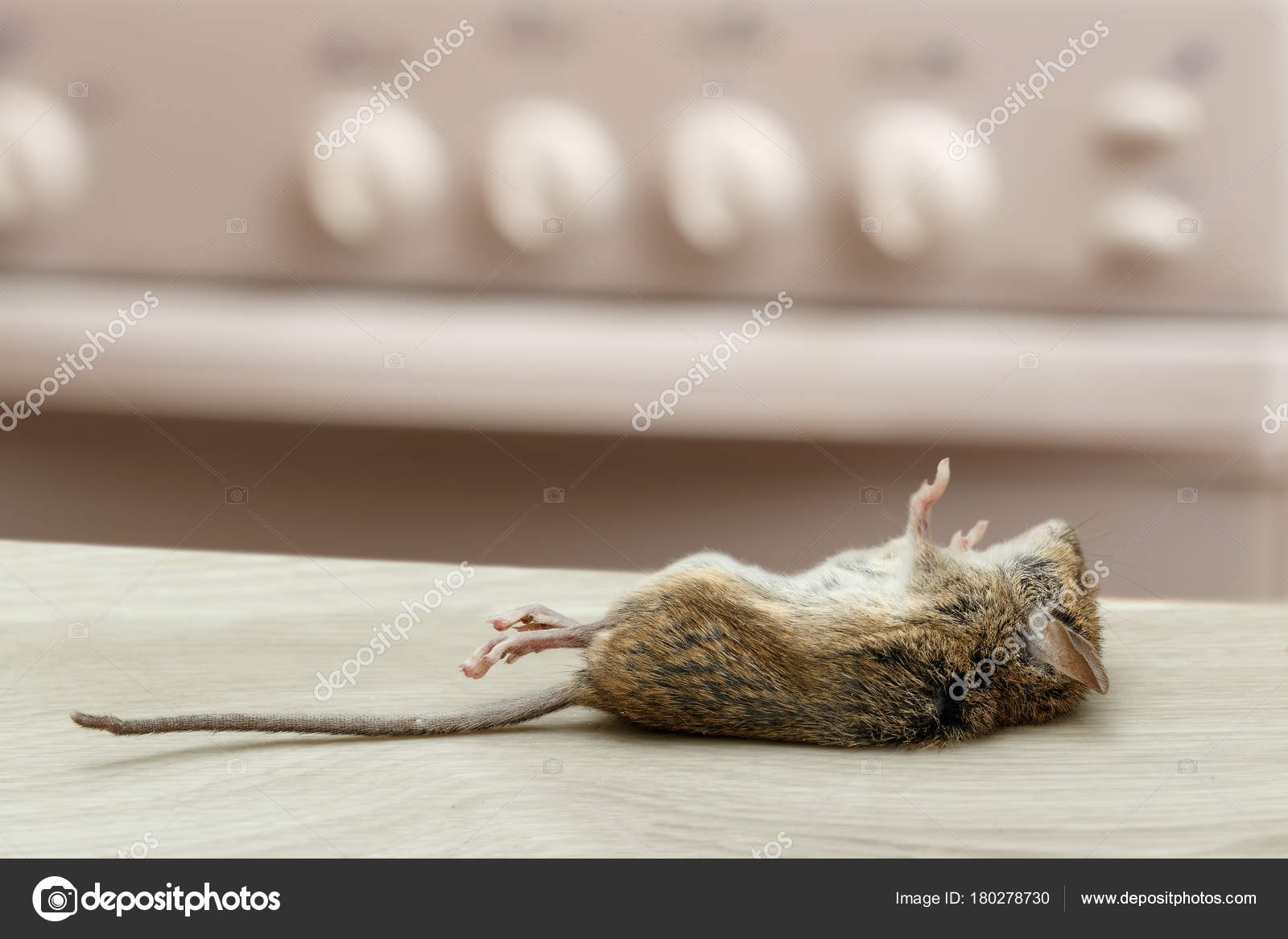 Dead Mouse Apartment Kitchen High Rise Buildings Fight Rodent ...