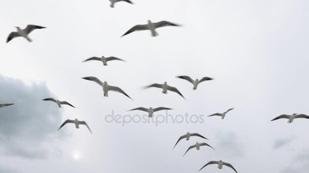 Sirályok repülnek az égen a téli és a fogást az étel, Nézd alatt