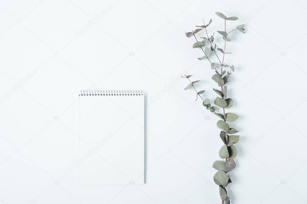 Top view template of empty notepad sheet and eucalyptus branch o