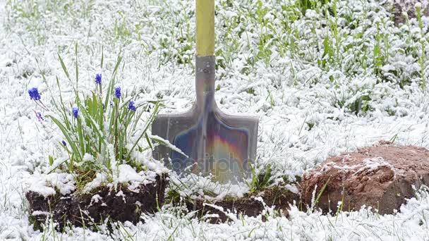 lopatu květiny silná sněhová bouře