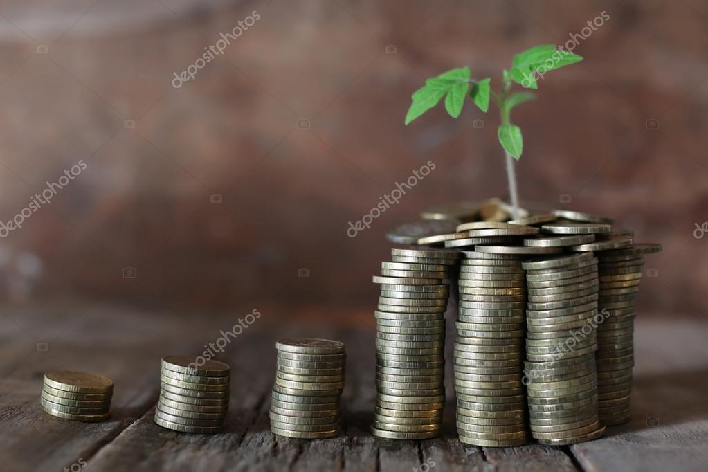 plant and stacks of coins