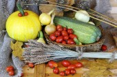 Tomato harvest of pumpkins and autumn vegetables