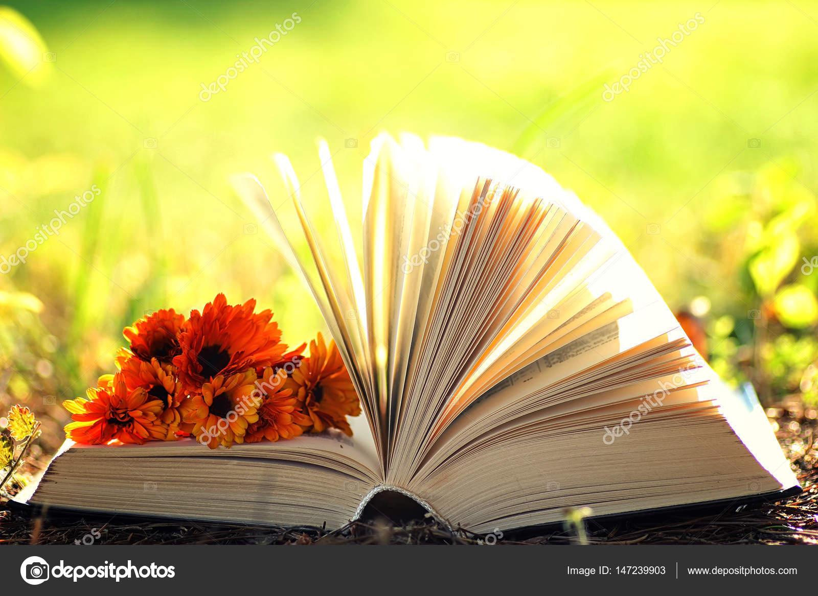 Hơn 3.000 bài thơ tình Phạm Bá Chiểu - Page 20 Depositphotos_147239903-stock-photo-open-book-with-flower-on