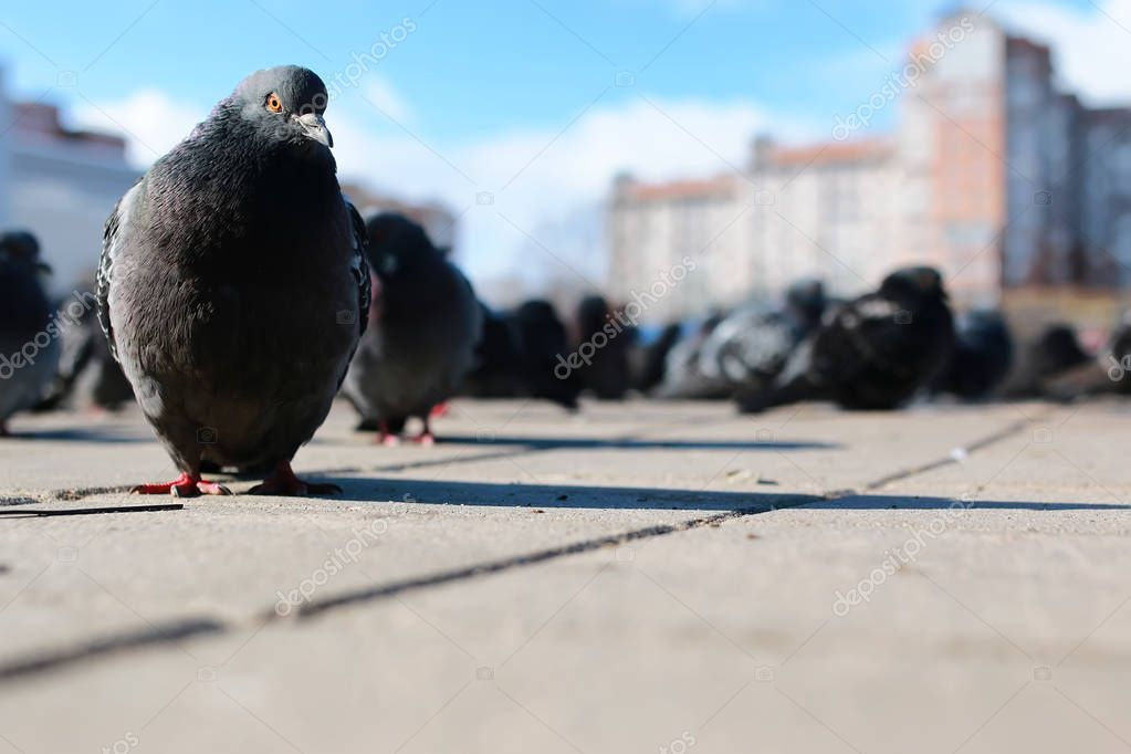doves on the background of the city