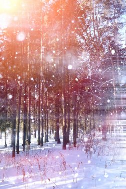 Winter forest on a sunny day. Landscape in the forest on a snowy morning. New Year winter forest. stock vector