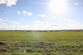 Landschaft ist Sommer. grüne Bäume und Gras in einem ländlichen Land