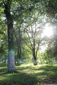 parku list slunce