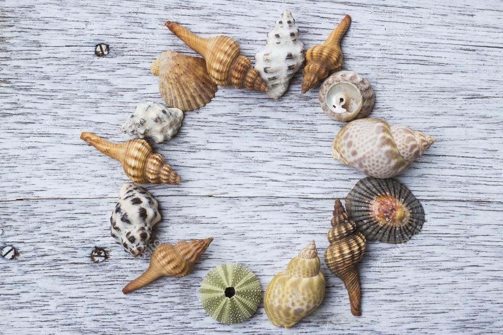 Marco de círculo seashell — Foto de stock © MichikoDesign #125010704