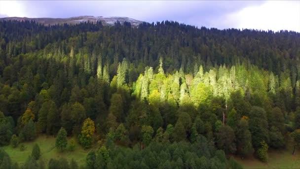 Letecký pohled na divoký horský Les