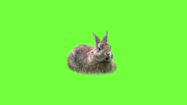 Funny rabbit on the grass