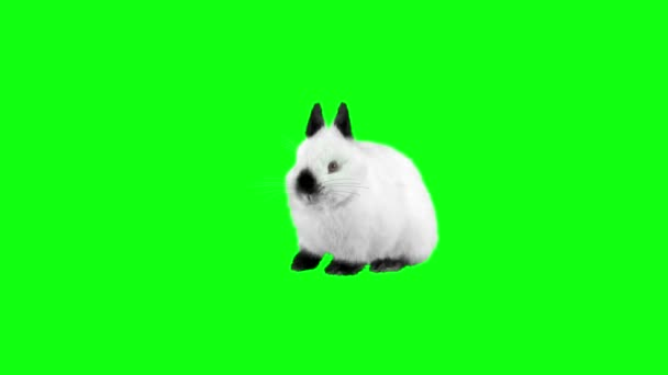 funny rabbit sitting and looking