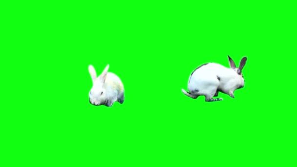 funny bunnies play