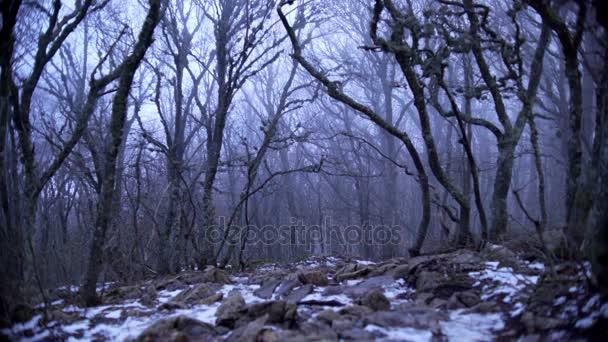Borús ködös erdő, lehullott levelek és a hó
