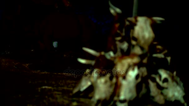 Cows skulls as a tribal totem