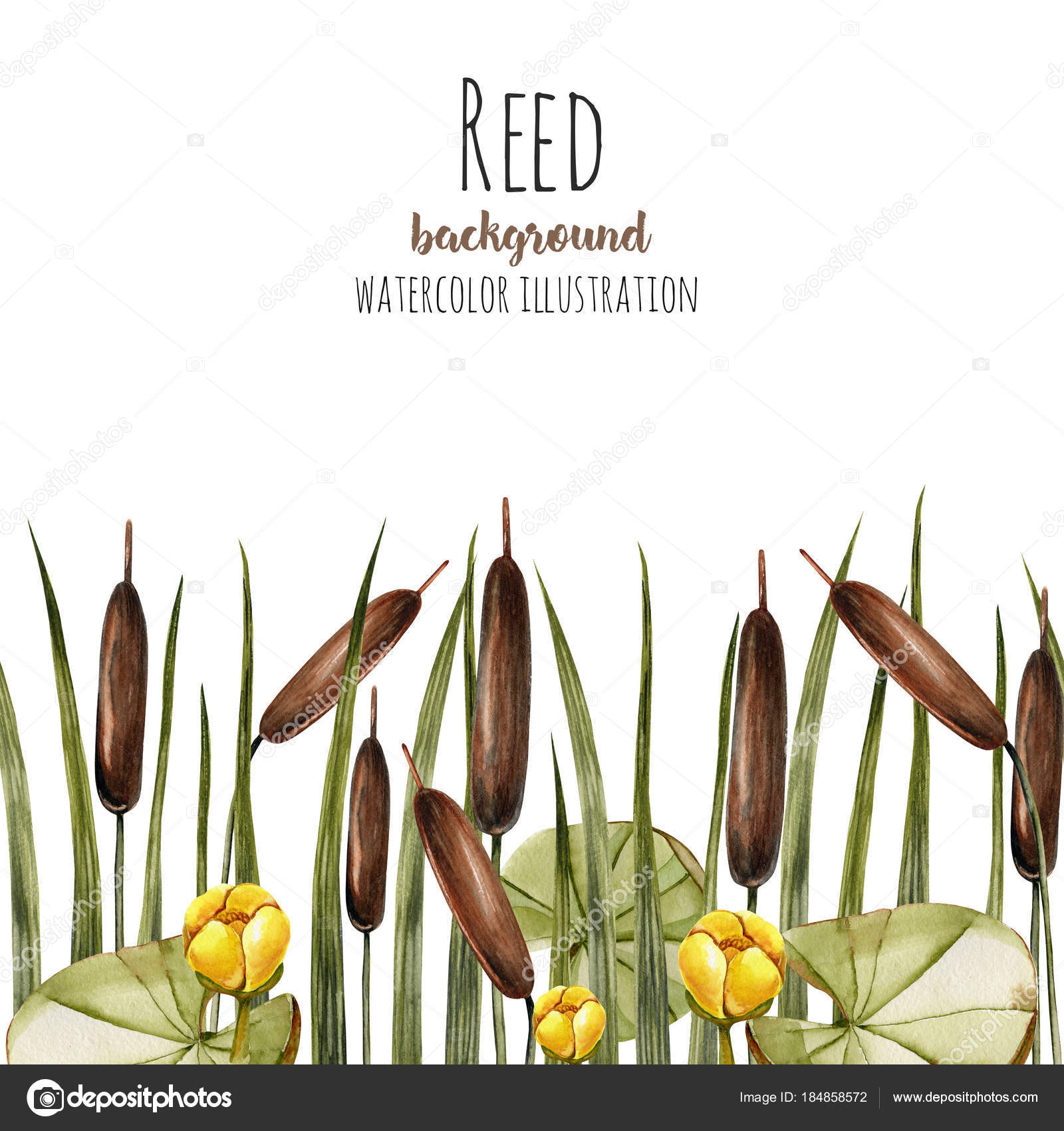 Watercolor Bulrush Yellow Water Lily Background Greeting Card ...