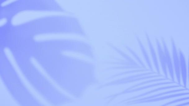 Stínová palmová tropická listová příšera