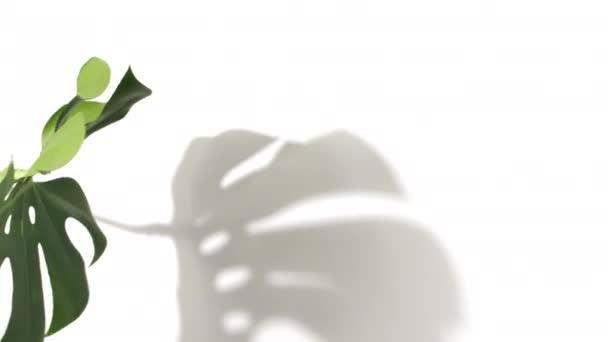 Zelená tropická dlaň a Monstera