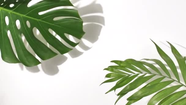 Tropical palm and Monstera