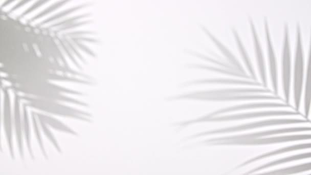 Stín černá bílá palma tropický list