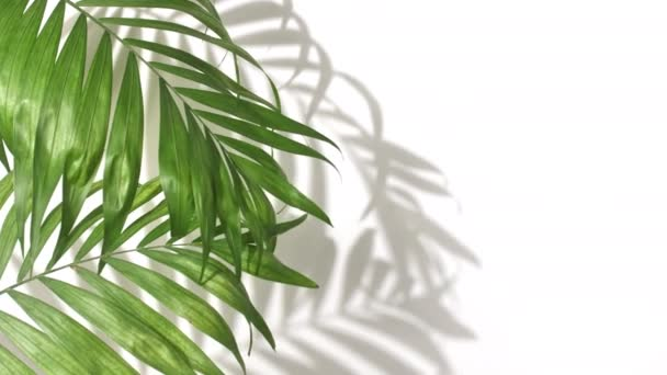Motion of tropical palm leaves