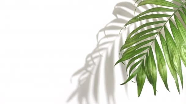 Tropische Palme und Monstera