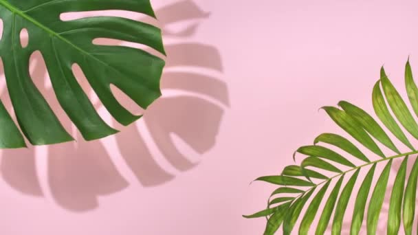 Zelené tropické palmové listy Monstera