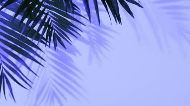 Tropické palmové listy v tučném gradientu holografických barev