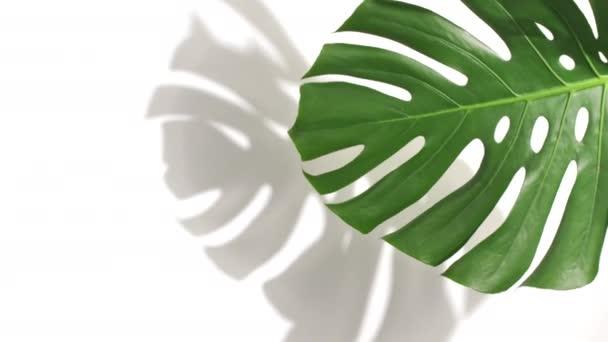 Zöld trópusi pálma és Monstera